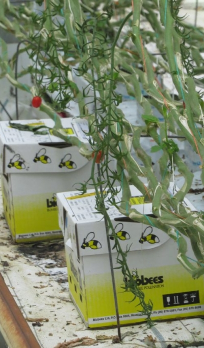 Boxed Beehives
