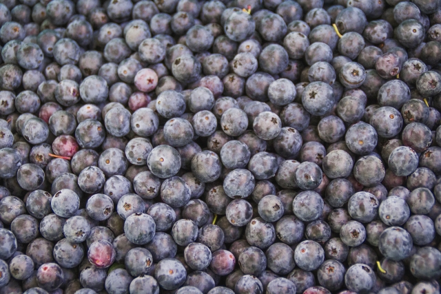 Blueberries by Gourmet Blueberries