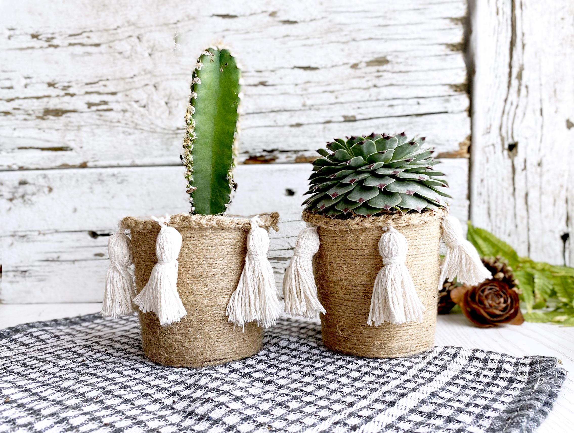Beautiful Cati and succulent in twine wrapped pottle with tassels