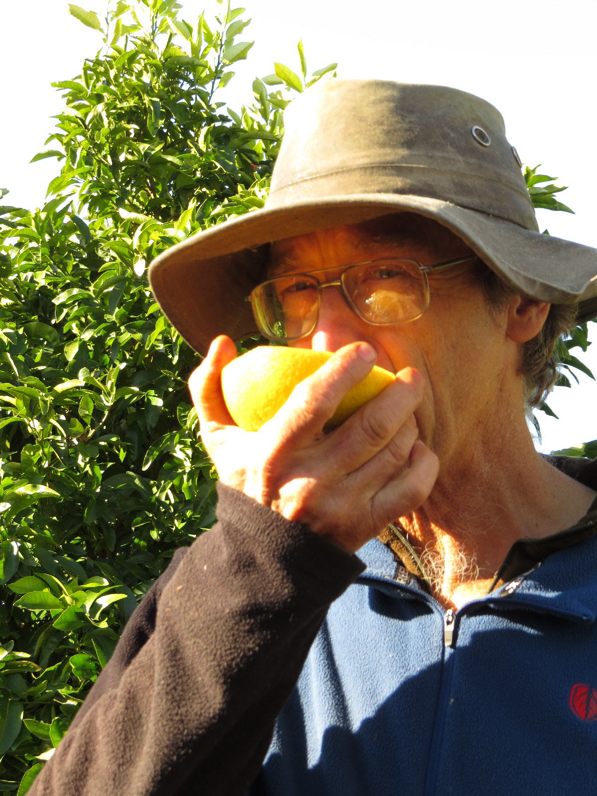 clive lewis - grapefruit grower from gisborne